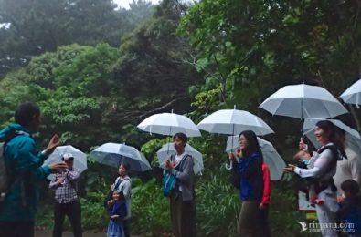 雨の日のホタルツアー