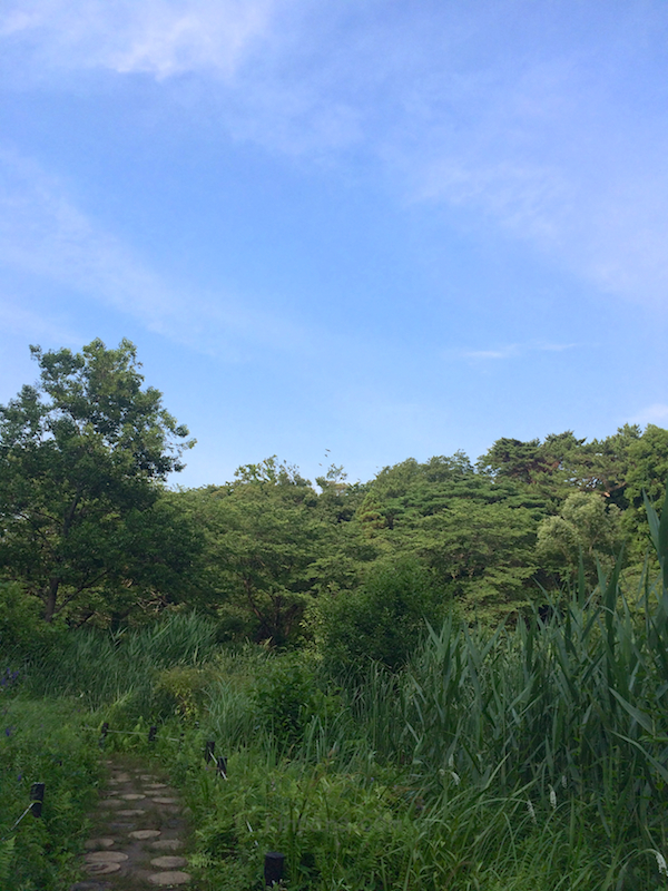 東京都心の森。目黒の自然教育園へ。