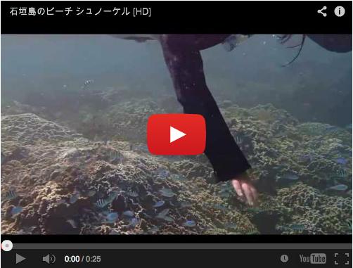[動画あり] 熱帯魚に囲まれる、ビーチでのシュノーケルツアー
