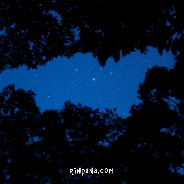 満天の星空と、ホタルを見たツアー