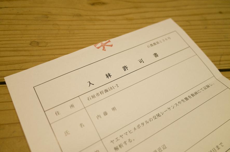 ヤエヤマヒメボタル調査のため、入林許可を受けました
