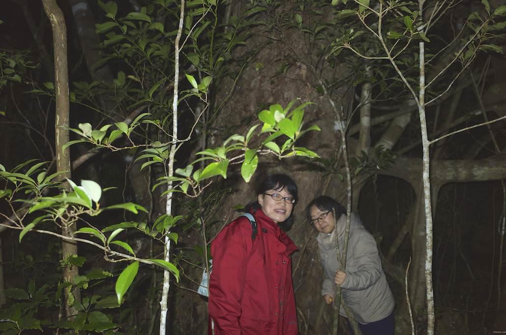 巨木に出会うナイトツアー