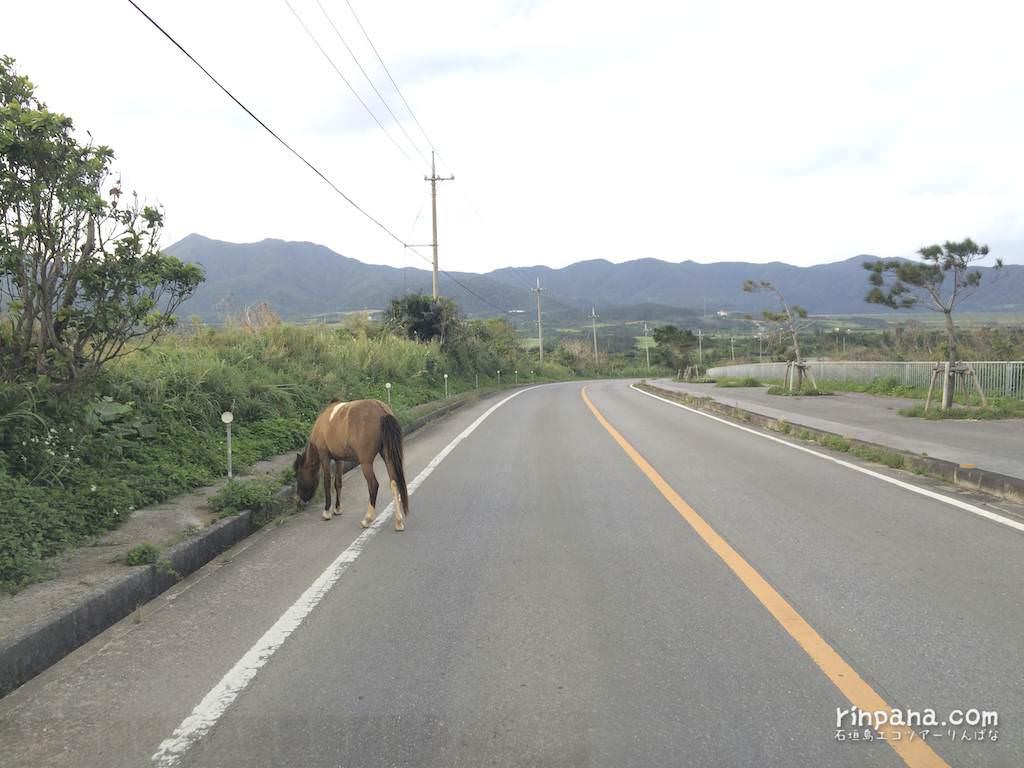 車が遅いと思ったら馬が走ってた。