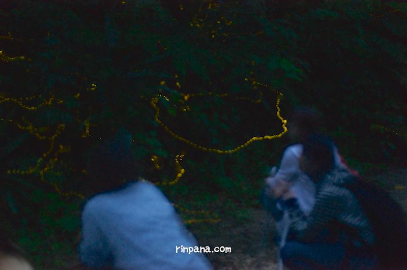 石垣島でホタルの明かりを楽しむナイトツアー。