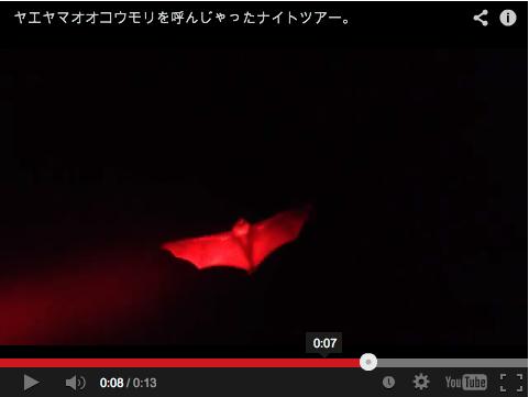 [動画あり] コウモリを呼んじゃったナイトツアー