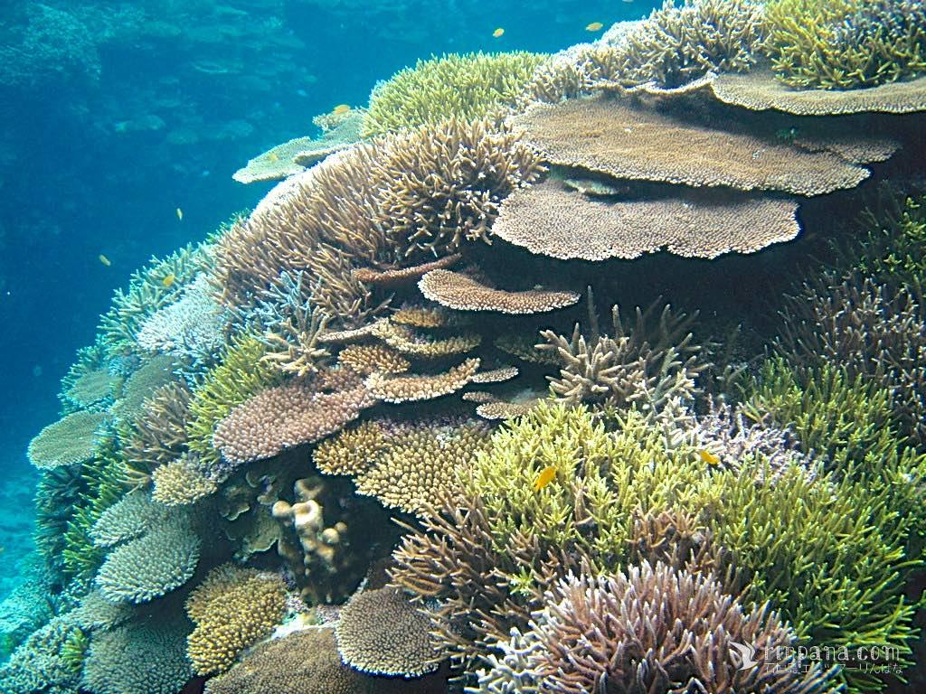 私たちがサンゴ礁を調べる訳(中編)