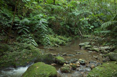 石垣島の美しい川
