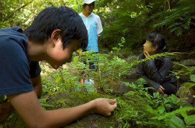 植物に見入る参加者