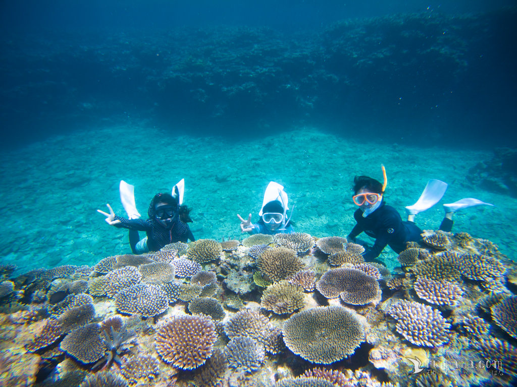 [サンゴツアー] 今いちばん美しいサンゴ礁へシュノーケルに行ってきました