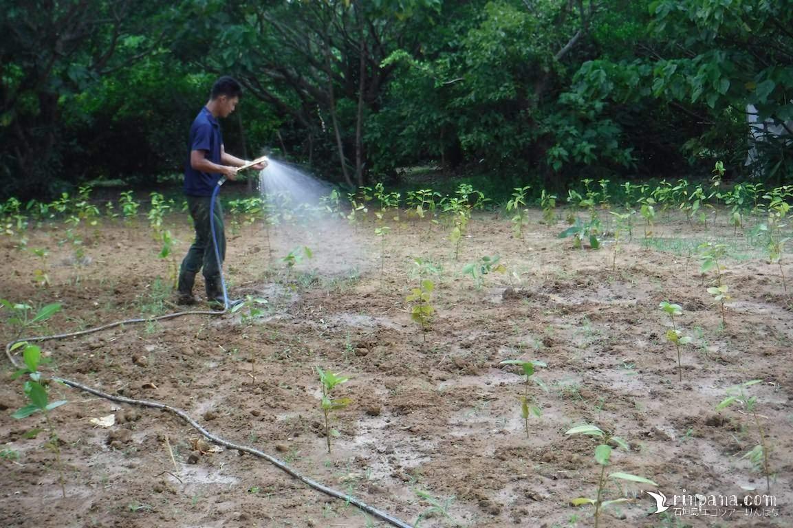 植樹した畑にスプリンクラーを立てました。