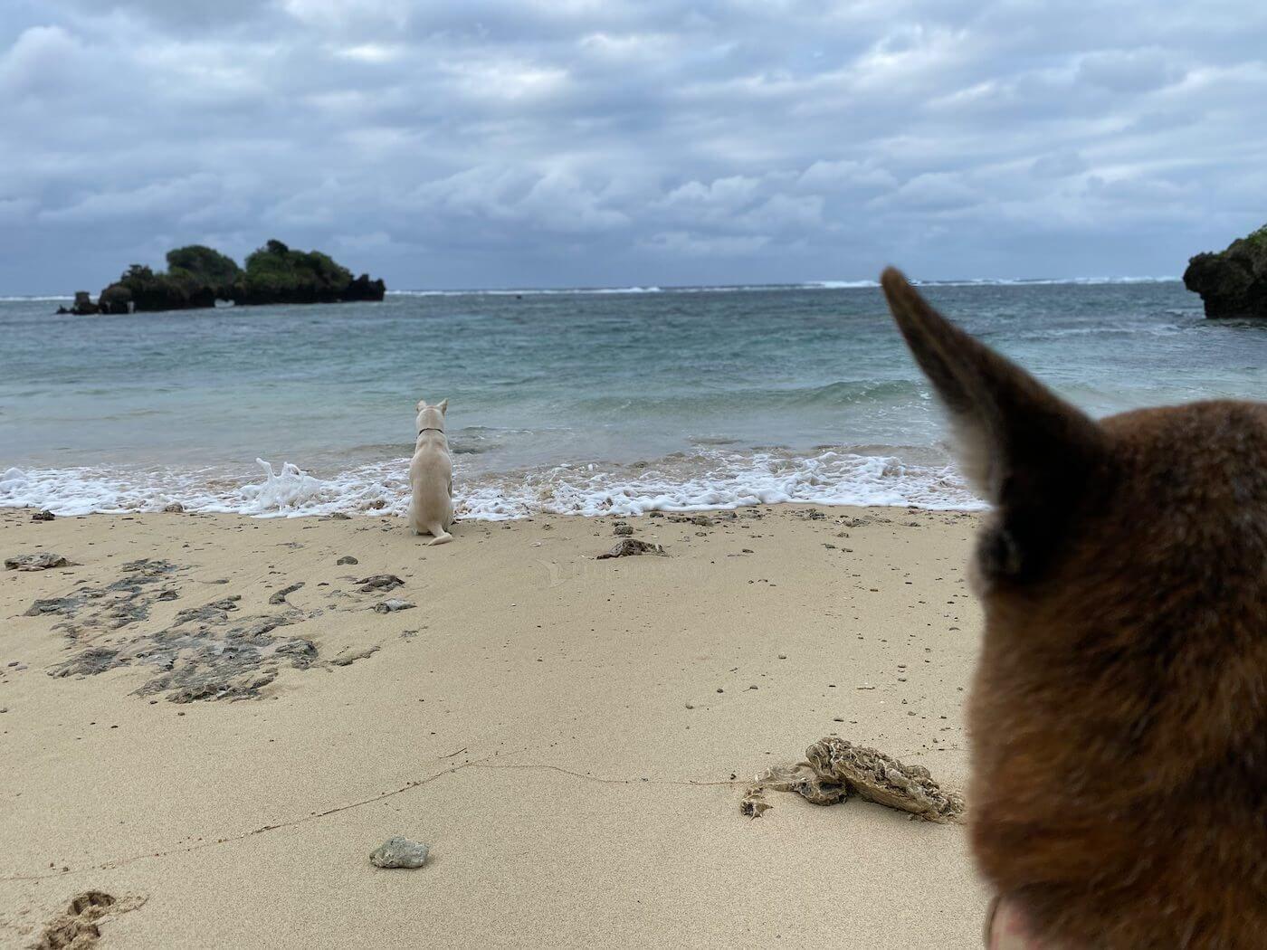 波にのまれる犬