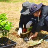 石垣島植樹イベント2020