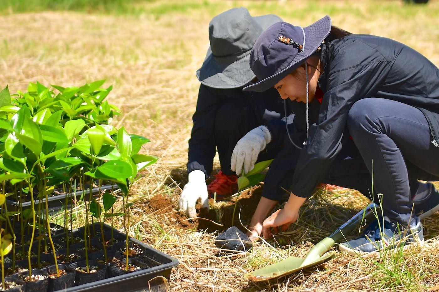 植樹祭2020で220本の木が植えられました